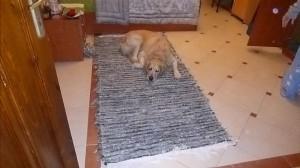 autum rug
